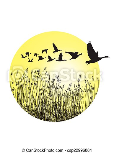 Geese and reeds in the ring - csp22996884