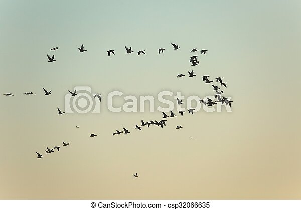 Geese Flying - csp32066635