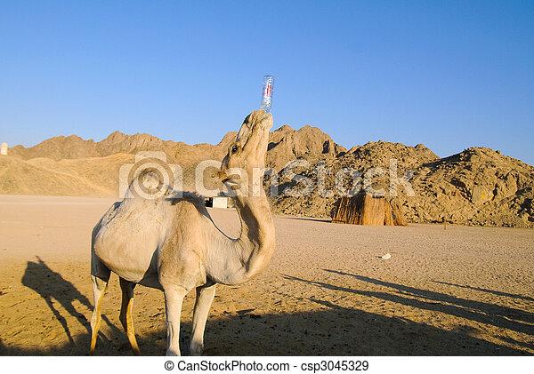 gekke , kameel - csp3045329