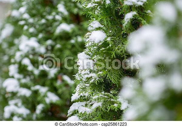 gelado, inverno - csp25861223