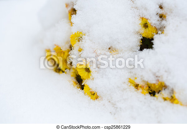 gelado, inverno - csp25861229