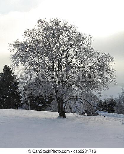 gelado, inverno - csp2231716