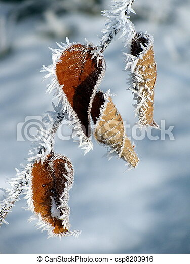 gelado, inverno - csp8203916