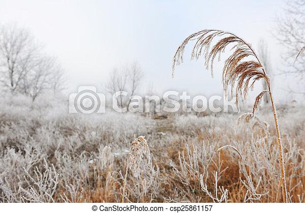gelado, inverno - csp25861157
