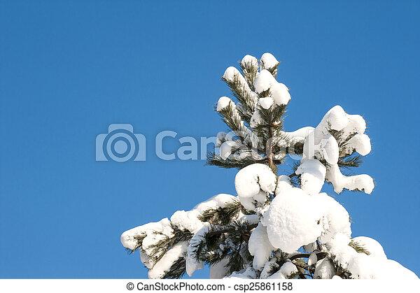 gelado, inverno - csp25861158