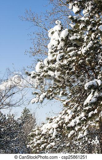 gelado, inverno - csp25861251