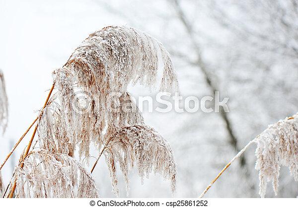 gelado, inverno - csp25861252