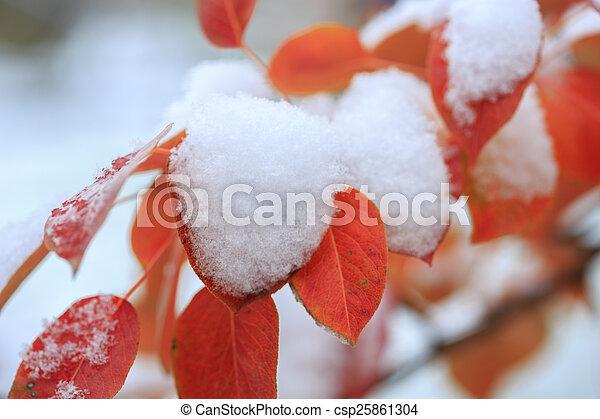 gelado, inverno - csp25861304