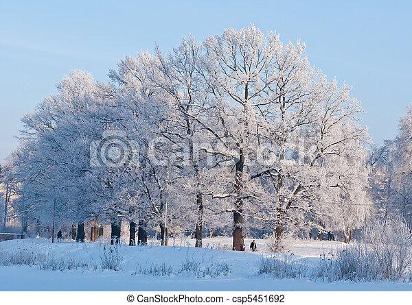 gelado, inverno, dia - csp5451692