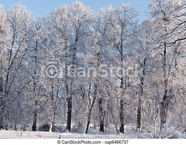 gelado, inverno, dia - csp6466737