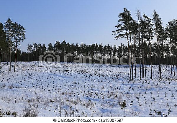 gelado, inverno, dia - csp13087597