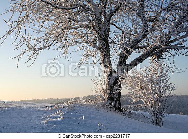 gelado, inverno - csp2231717