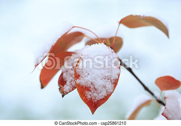 gelado, inverno - csp25861210