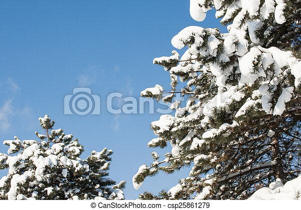 gelado, inverno - csp25861279