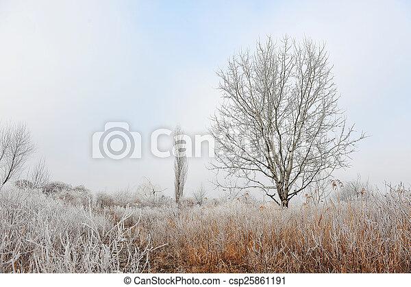 gelado, inverno - csp25861191
