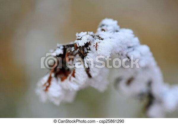 gelado, inverno - csp25861290