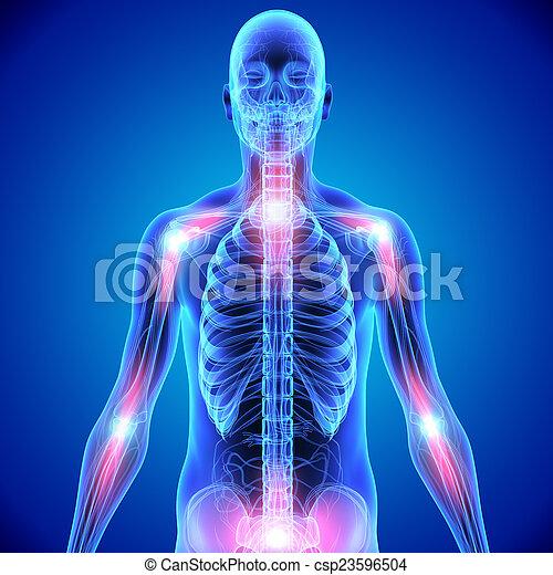 Gelenke, skelett, knochen. Steuerung, skelett, gelenke, ihm, eins ...
