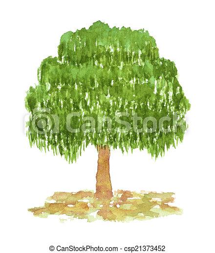 Gemalt Hand Aquarell Baum Birke Gezeichnet Gemalt