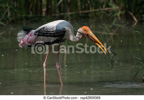 Gemalt Nest Storch Indische Ibis Machen Gras Leucocephalus