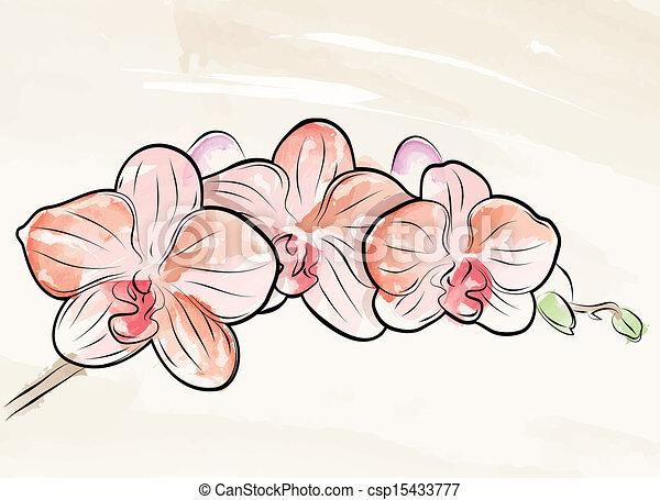 Vector malte Orchidee - csp15433777