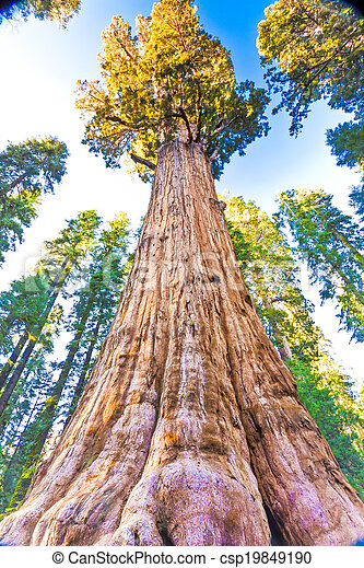 General Sherman, Largest Tree in the World - csp19849190