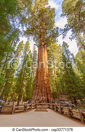 General Sherman Tree in Sequoia National Park, California USA - csp33771378
