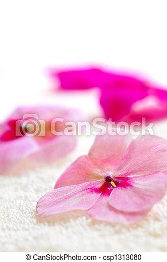 Gentle flower on luxury towel - csp1313080
