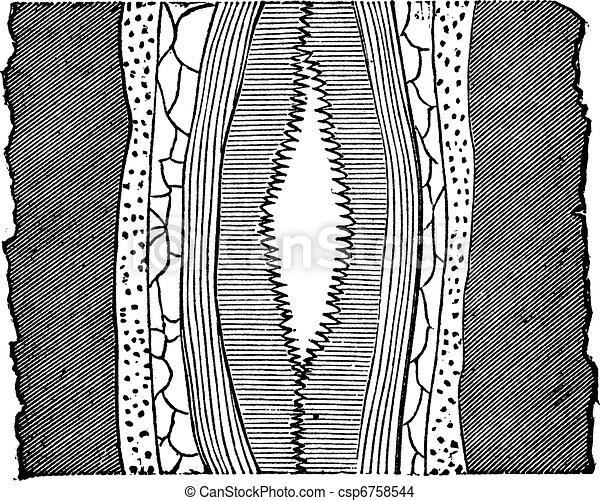 Geological Vein, vintage engraved illustration. - csp6758544