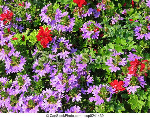 Flores de geranio - csp0241439