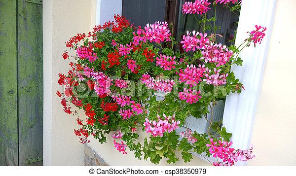 Flores de Geranio - csp38350979