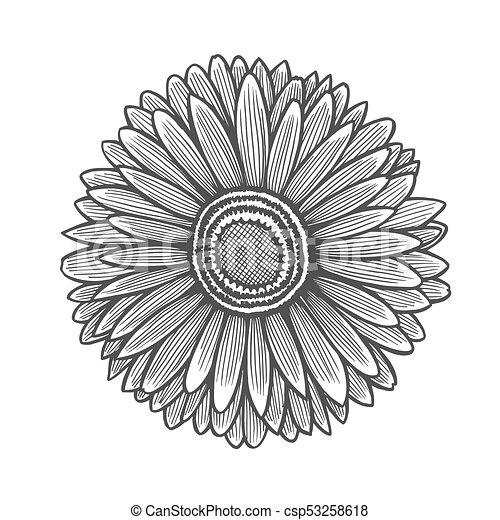 Gerbera Flower Illustration Line Pattern Vector Artwork Coloring Book Page For Adult Love Bohemia Concept Wedding Invitation Card Ticket Branding