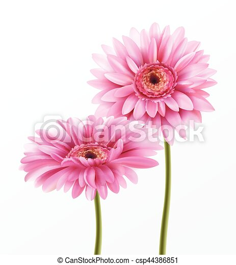 Gerbera flower isolated on white background vector illustration eps10 gerbera flower isolated on white background vector illustration mightylinksfo