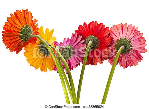 Gerbera flower on white gerbera flower bouquet isolated on stock gerbera flower on white csp38865024 mightylinksfo Choice Image