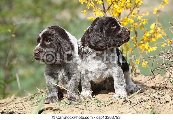 German Quail Dog  - csp13363793