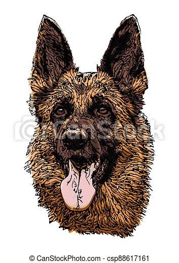 German shepherd - csp88617161