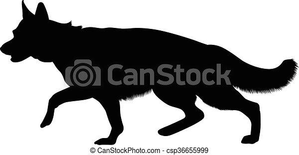 German Shepherd - csp36655999