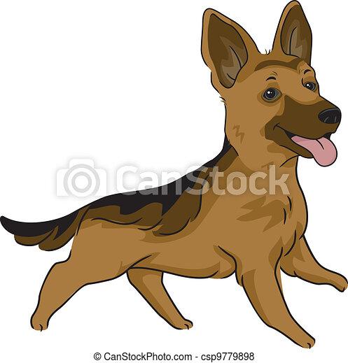 German Shepherd - csp9779898