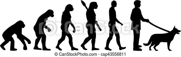 German Shepherd evolution - csp43556811