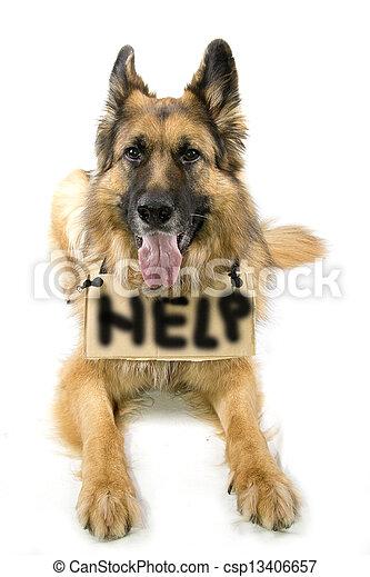 German Shepherd - csp13406657