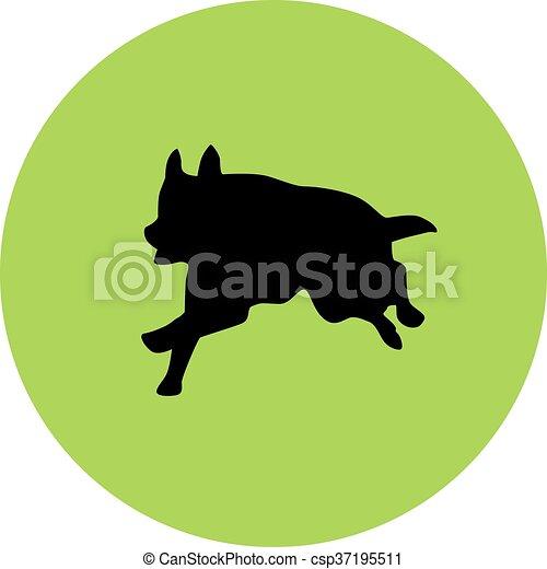 german shepherd - csp37195511