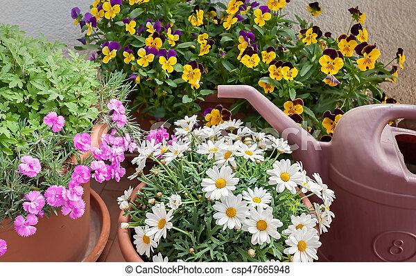 Blumen Für Die Wohnung gewachsen, blumen, wohnung, terrasse, vasen. gewachsen, wohnung, can