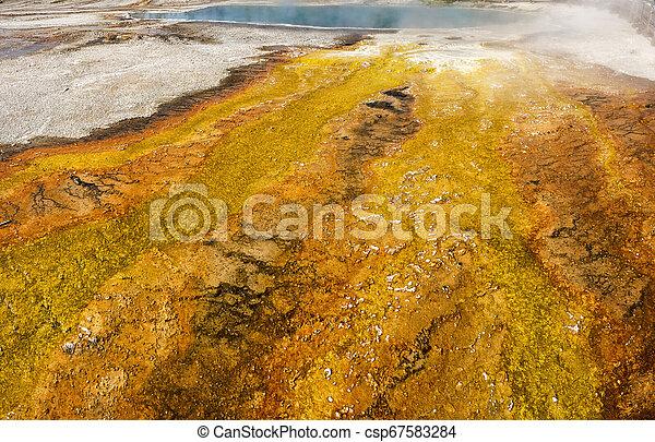 Geyser in Yellowstone National Park - csp67583284