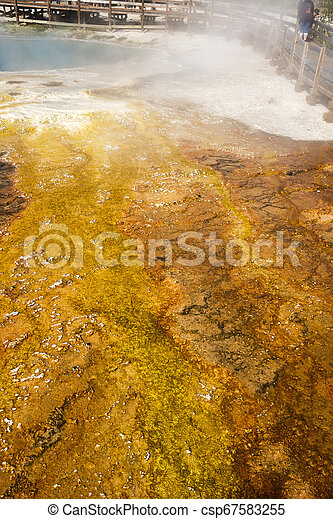 Geyser in Yellowstone National Park - csp67583255