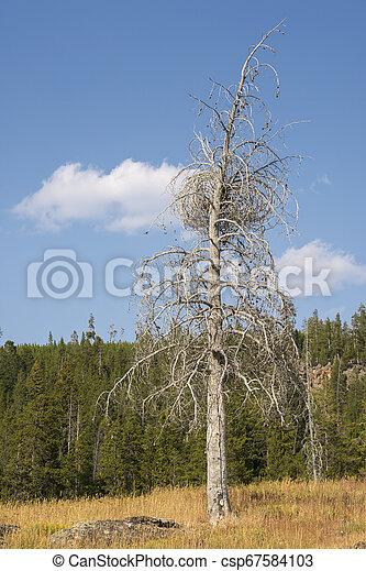 Geyser in Yellowstone National Park - csp67584103