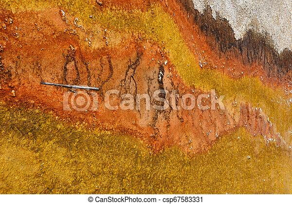 Geyser in Yellowstone National Park - csp67583331