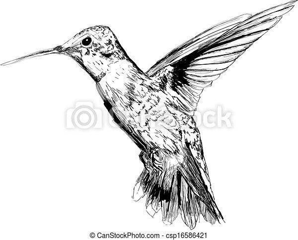 gezeichnet hand kolibri sch ne hand drawn wei es clipart suche illustrationen. Black Bedroom Furniture Sets. Home Design Ideas