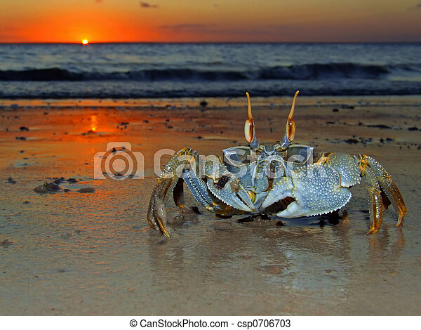 Ghost crab at sunset - csp0706703