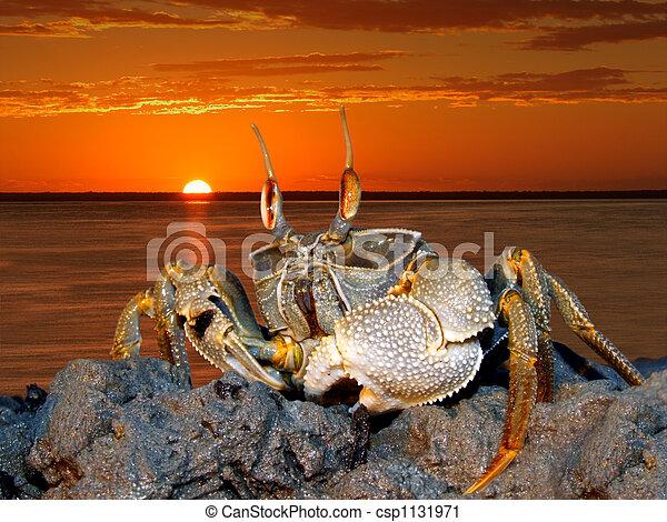 Ghost crab on rocks - csp1131971