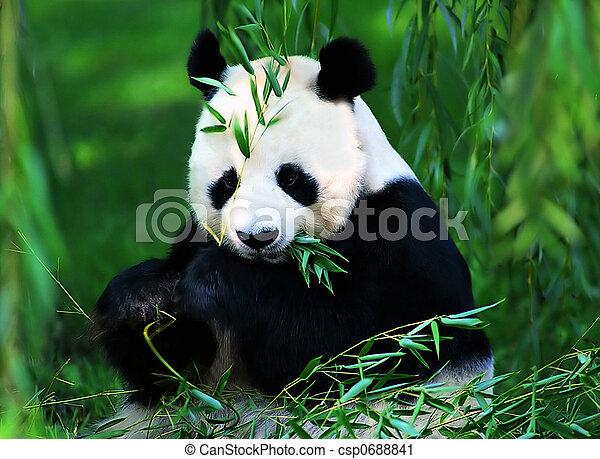 Giant Panda - csp0688841