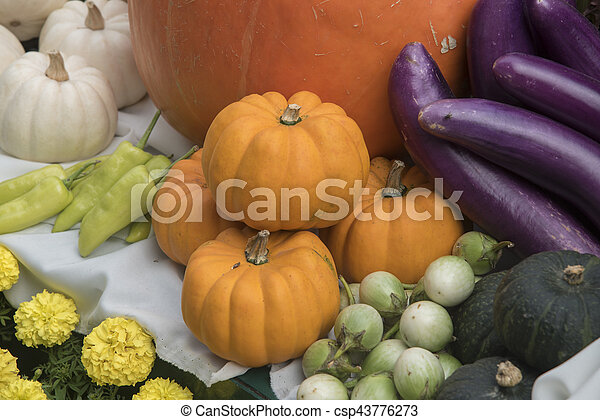 Giant pumpkin - csp43776273